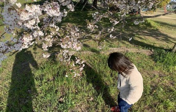 Vol.16 桜を見に散歩に行くと、落ちた花びらの方に興味を持つ変わり者丸出しの娘です